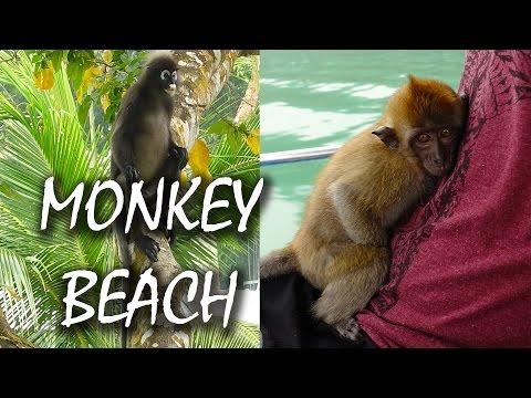 Monkey Beach Penang - wilde Affen hautnah - Monkey Forest - Malaysia | VLOG #29