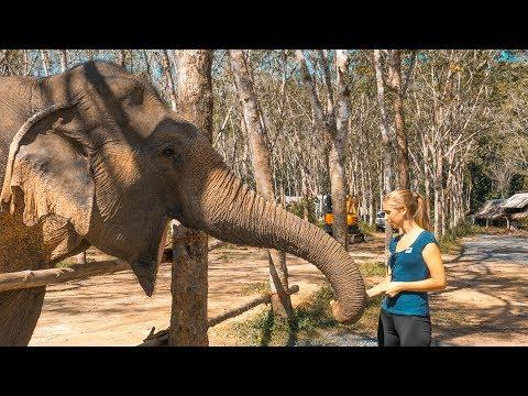 Einer der größten Fehler unseres Lebens • Phuket • Thailand | VLOG #317