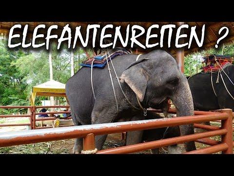 Darum solltest du niemals auf Elefanten reiten - Koh Samui Thailand | VLOG #19