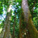 Dschungel Tour zum Wasserfall Hin Lad Koh Samui 14