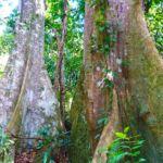 Dschungel Tour zum Wasserfall Hin Lad Koh Samui 15