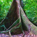 Dschungel Tour zum Wasserfall Hin Lad Koh Samui 16