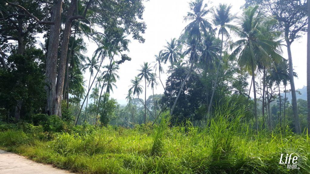 Rollerpanne im Dschungel - 2