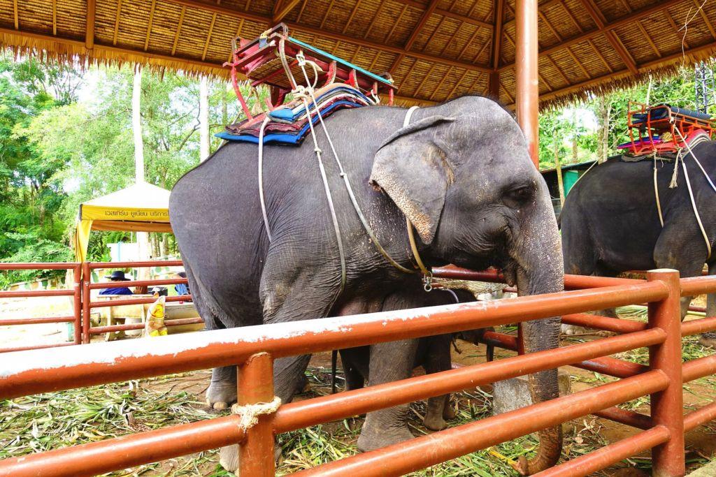 Wilde Tiere und Elefantenreiten in Thailand - 1