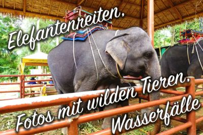 Wilde Tiere und Elefantenreiten in Thailand