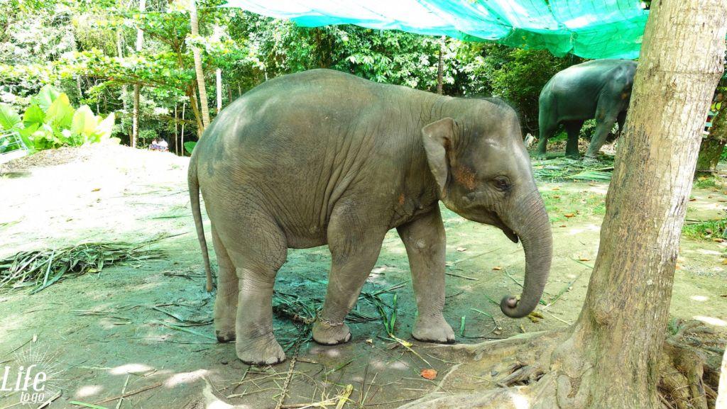 Wilde Tiere und Elefantenreiten in Thailand - 6
