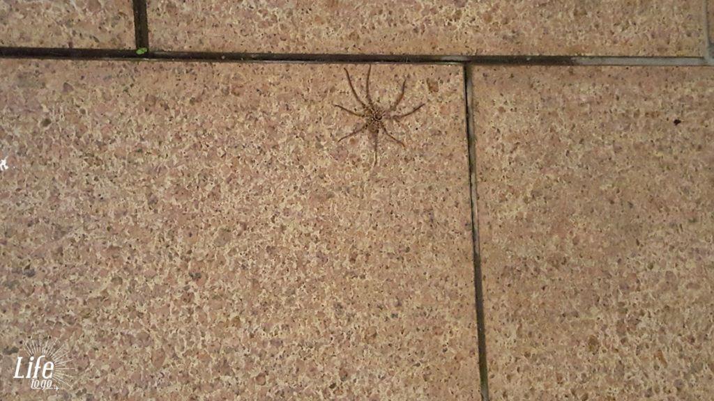 Reisetagebuch Australien - 28.01.2016 - Vorsicht Spinne - Tag 23