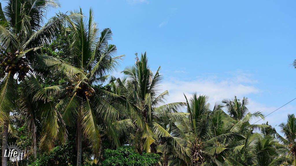 Palmen auf Bali - günstiger Urlaub auf Bali