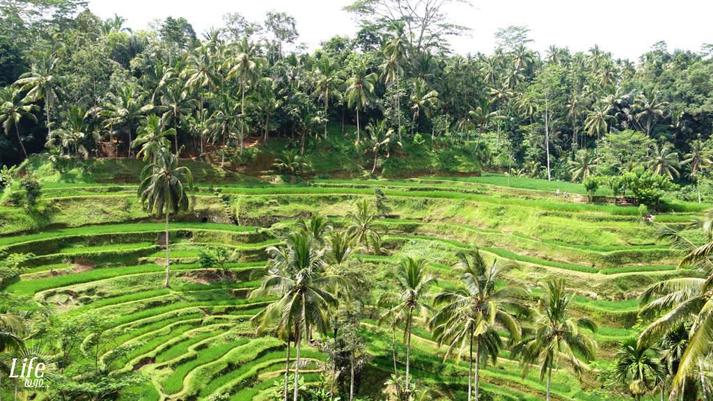 Tegallalang Reisterassen auf Bali - Blogbeitrag über Bali, Reisterassen und Wasserfälle
