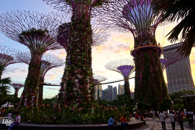 Singapur Highlights die Gardens by the Bay Supertrees