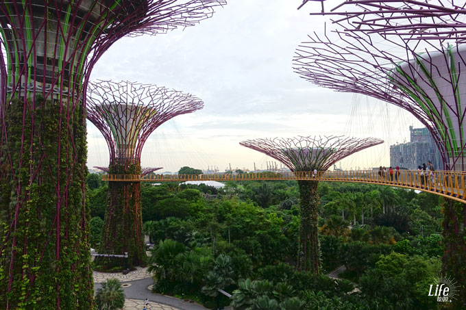 Supertree Skywalk Gardens by the Bay Singapur