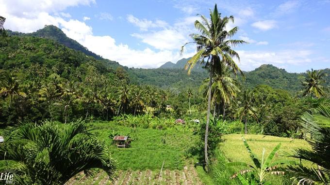 Villa Manuk Bali Ricefield View