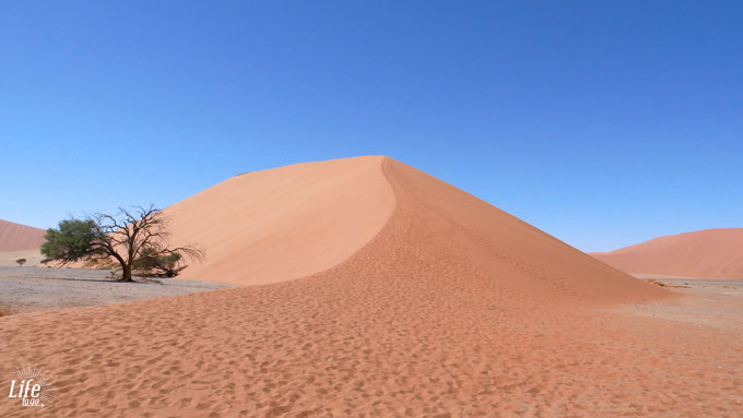 Big Daddy Dune Sossusvlei