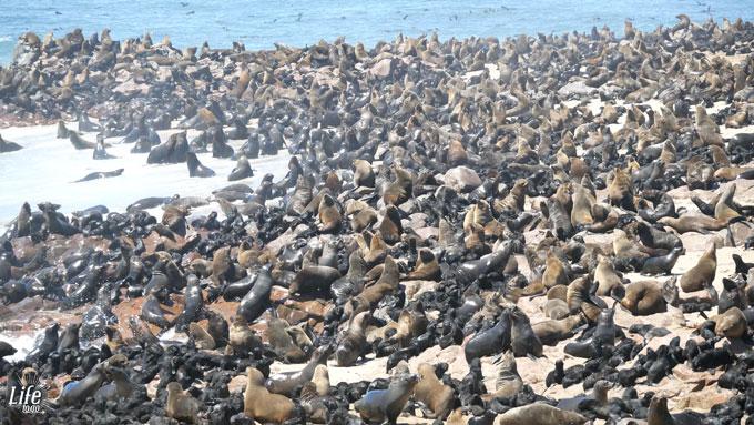 Cape Cross Seal Reserve und hunderttausende Robben