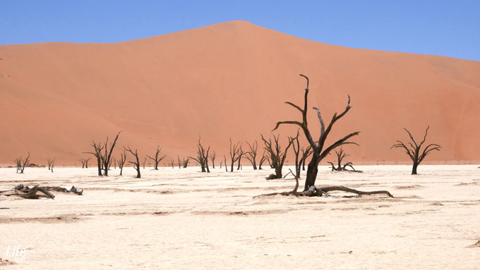 Deadvlei Namibia Roadtrip