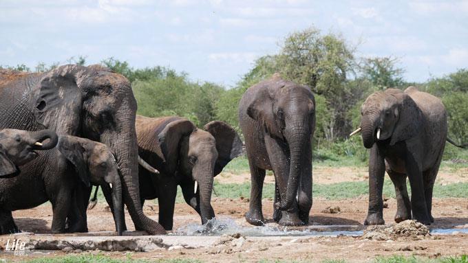 Elefanten am Wasserloch im Etosha Nationalpark