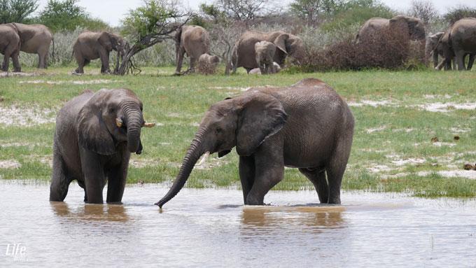 Elefantenherde im Etosha Nationalpark