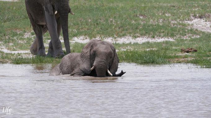 Etosha Elefant