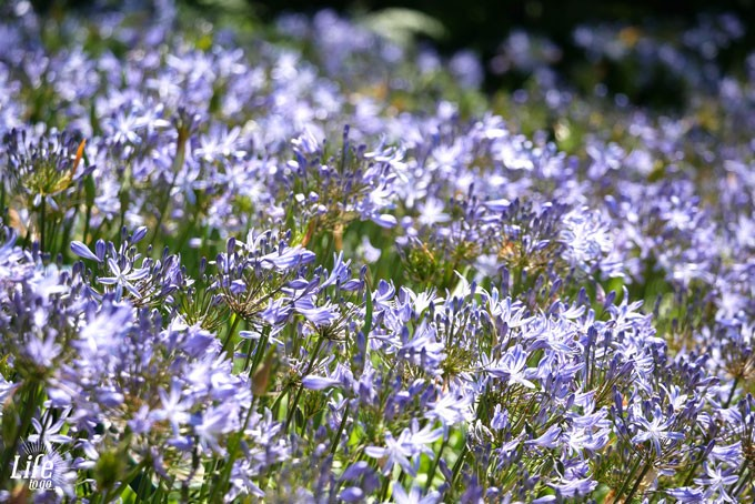 Kirstenbosch Botanical Garden Kapstadt Highlights