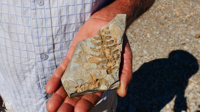 Mesosaurus Fossilien Namibia - Mesosaurus Führung