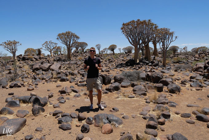 Quiver Tree Forrest Namibia