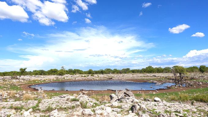 schönes Wasserloch im Etosha Nationalpark