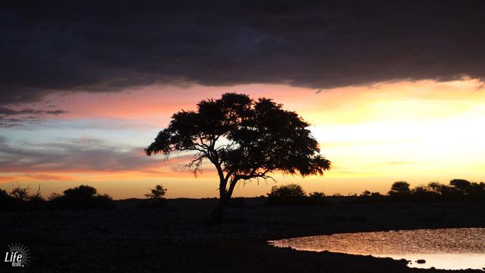 Wasserloch Okaukuejo Camp im Etosha Park Namibia