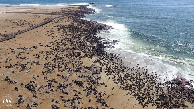 hunderttausend Robben am Cape Cross Seal Reserve