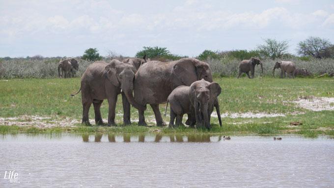 wilde Elefanten im Etosha Nationalpark