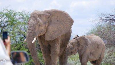 wundervolle Erlebnisse im Etosha Nationalpark Namibia