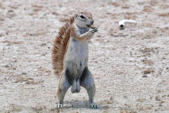 wundervolle Tiere im Etosha Nationalpark Namibia