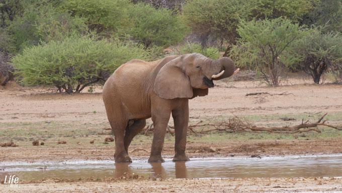 Erindi Game Reserve Elefant