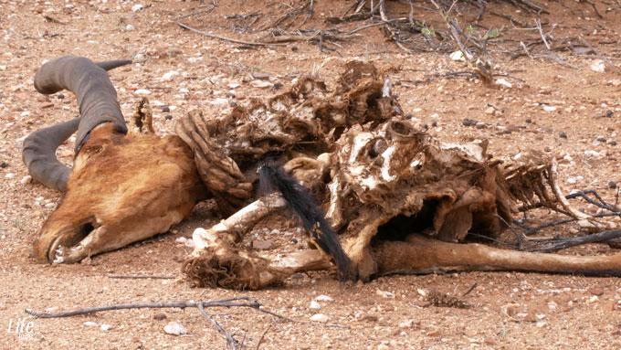 Kill im Erindi Game Reserve in Namibia