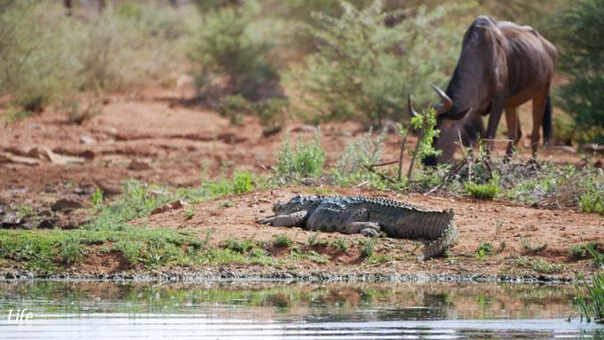 Wildlife Erindi Game Reserve
