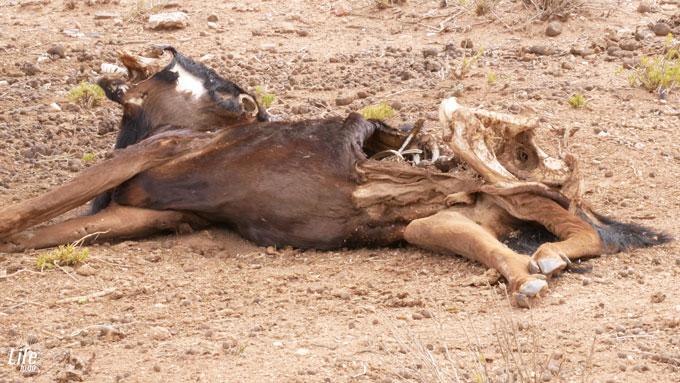weiterer Kill im Erindi Game Reserve