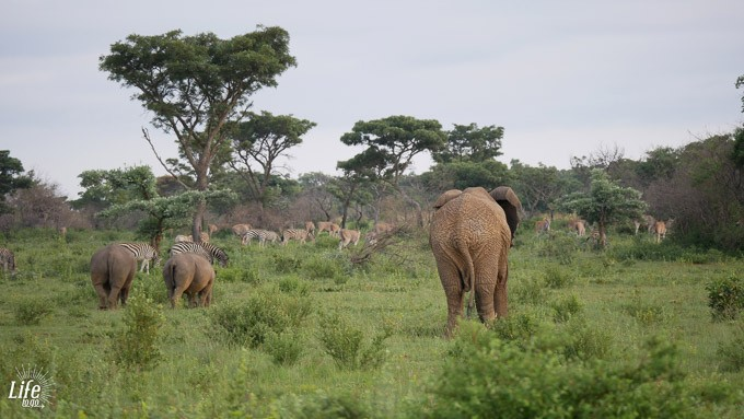 wilde Tiere auf Safari im Welgevonden Game Reserve Südafrika