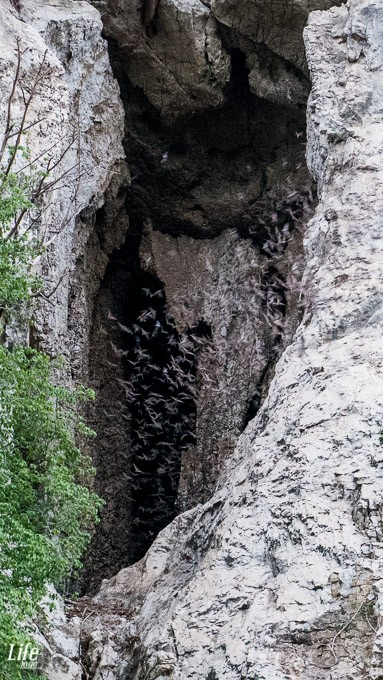 Bat Cave in Battambang, Kambodscha
