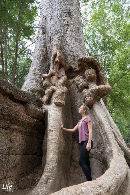 Tomb Raider Angkor Wat Siem Reap Kambodscha