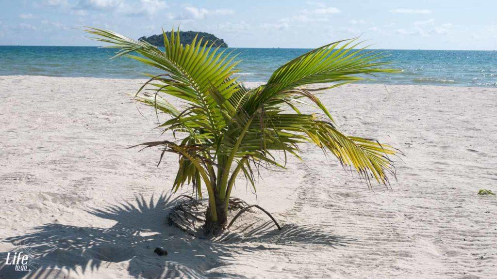 Palme am Strand Otres Beach