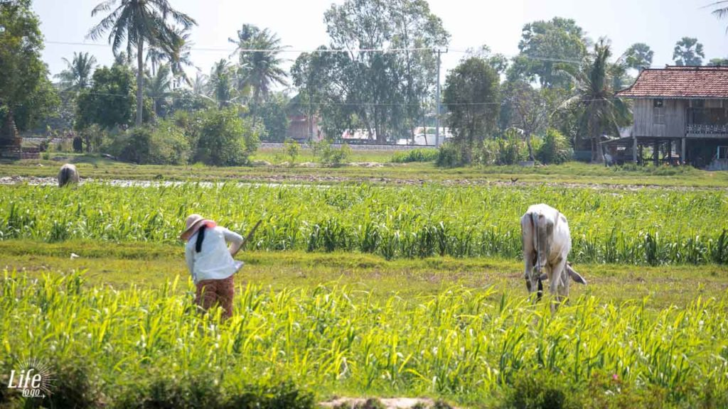 ursprüngliches Leben in Kampot Kambodscha