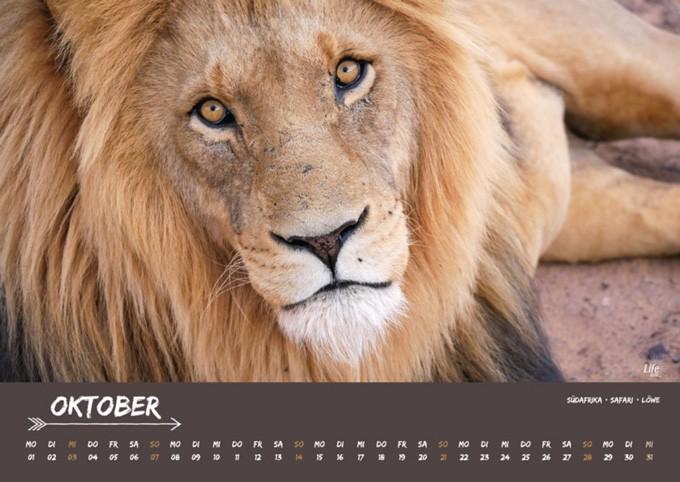 Life to go Jahreskalender 2018 - Monat Oktober