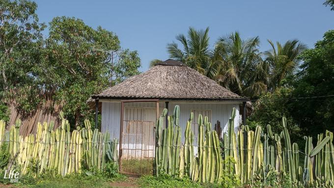 Auf dem Land - Kuba Reisetipps von Life to go