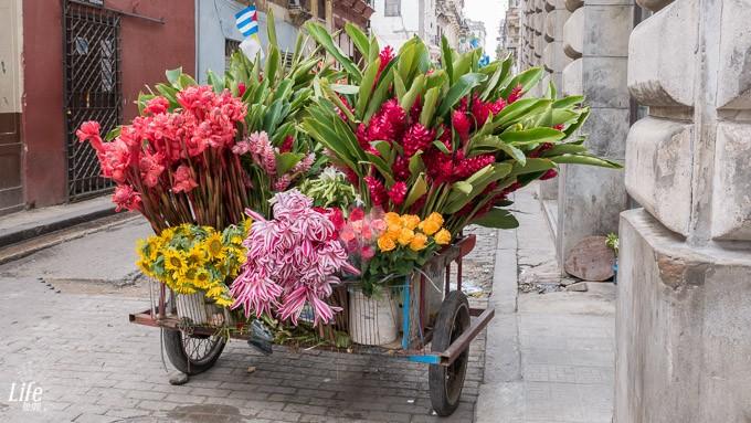 Bunte Blumen in Havanna auf Kuba