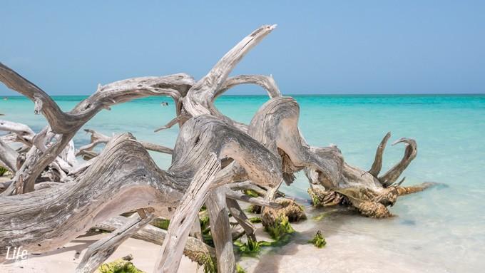Cayo Jutias - Karibischer Traumstrand auf Kuba - Kuba Reisetipps