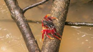 Artenvielfalt Cahuita Nationalpark