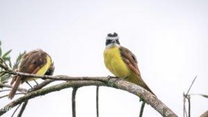 Bunte Vögel Costa Rica Arenal Paraiso Resort