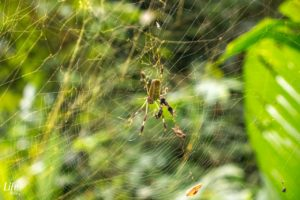 Cahuita Natioanlpark Spinne