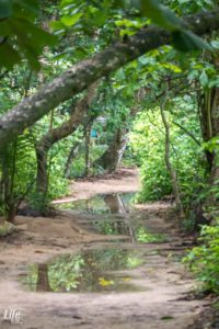 Wanderweg Cahuita Nationalpark nach Regen