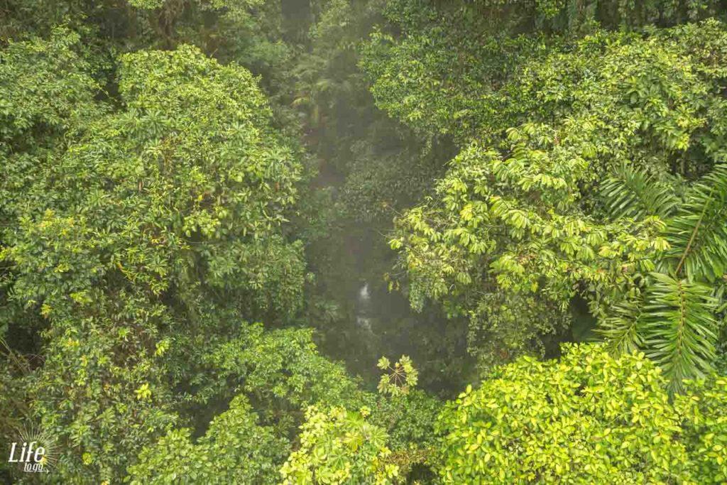 Mistico Hanging Bridges Park Costa Rica Aussicht