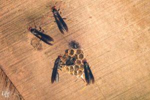Nestbau Insekten Costa Rica